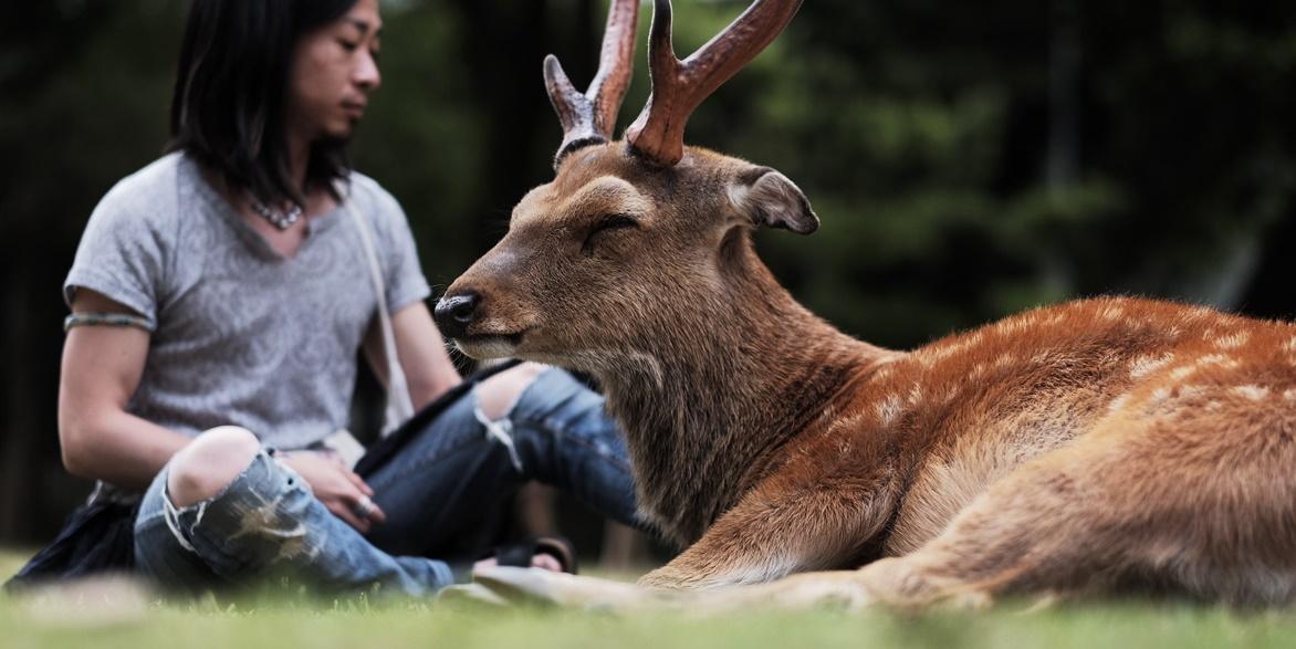 テッペイさんと鹿