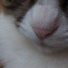 テリトリーを広げる旅/猫と仲良く【長崎行ってきたよ②】