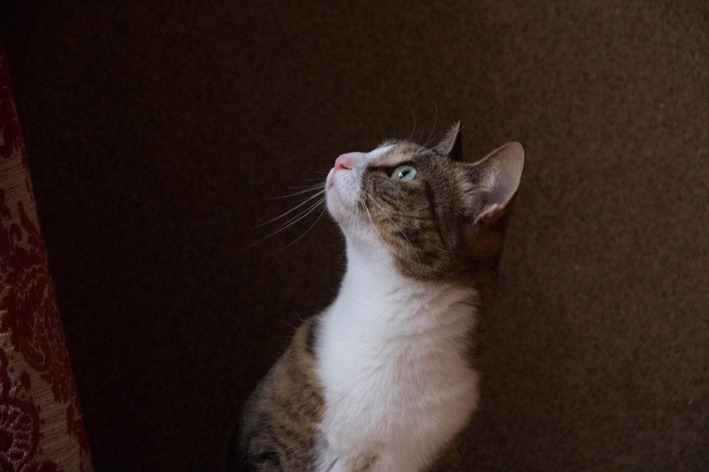 洋館 撮影 猫