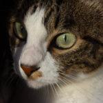 夏目漱石『吾輩は猫である』はなぜ面白い小説になったのか